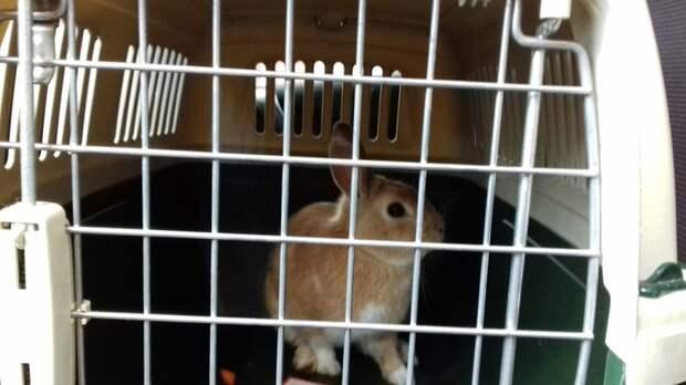 Кролик в клетке: на Ухтомской поймали ушастого