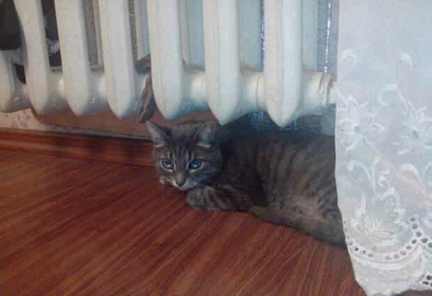 Кот был бы не кот если б не покочевряжися.  батарея, кот, лежанка, старость, тепло