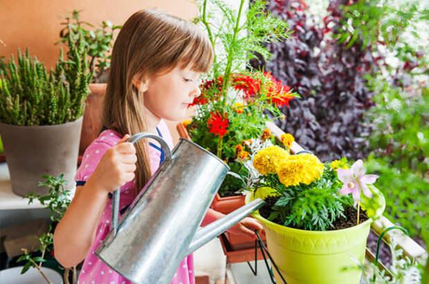 Можно поливать раствором. /Фото: ogorodnik.com.