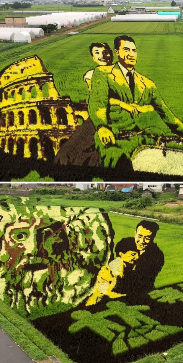 Рисовые поля Японии
