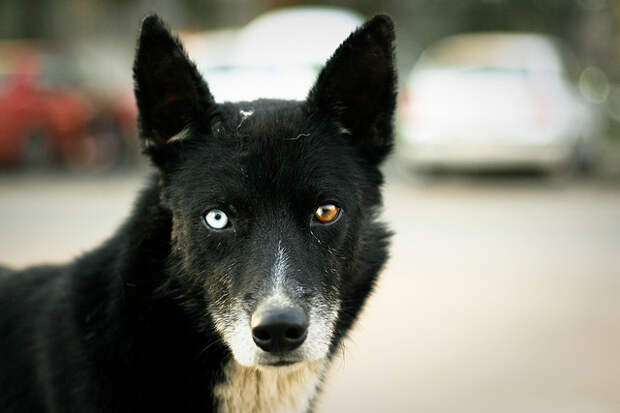 глаза - Животные ShewMe - Посмотри на мир по другому