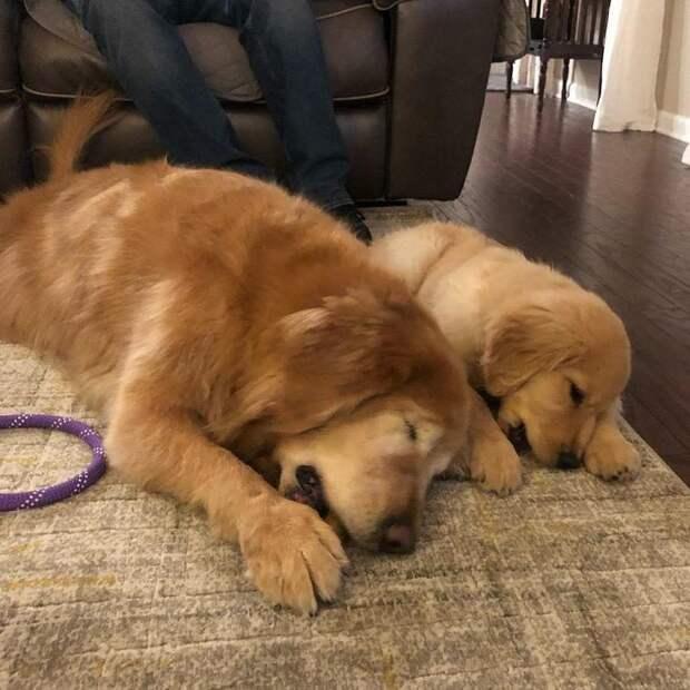 Собака, которой пришлось удалить глаза, но она нашла себе нового друга