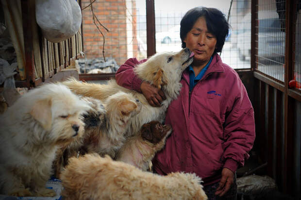 Она преодолела 2400 км и потратила 1100 $, чтобы спасти 100 собак от съедения собака, спасение