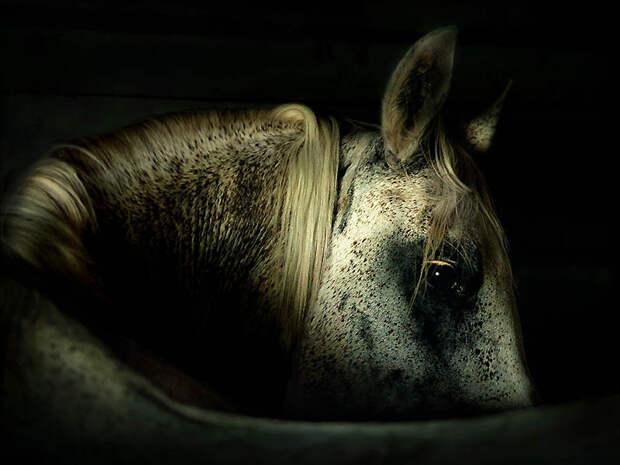25. Цены на эту породу взлетели в США после аукциона, на котором лошадь по имени Любовное зелье ушла