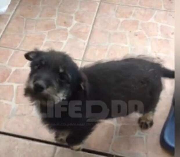 Соседи пытаются отобрать щенка у девушки-инвалида