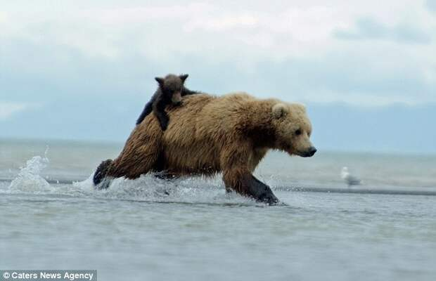 Clingy: The youngster clung on for dear life as she galloped across the shallows after the slippery fish