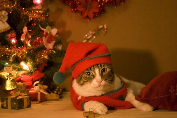 3166706_Christmas_cat_by_Maldyta (700x467, 72Kb)