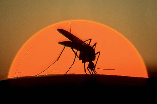 На высокой ноте: 8 занимательных фактов о комарах