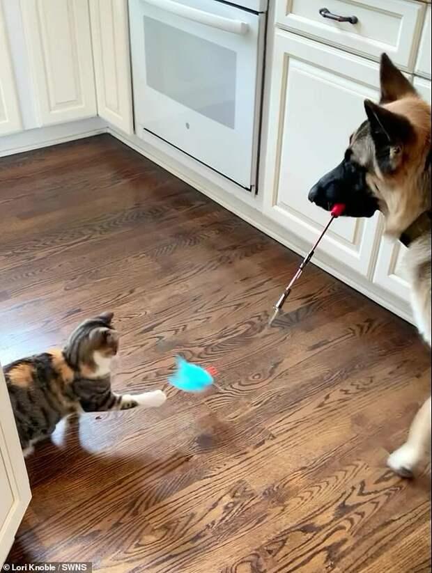 Собака спасла котенка и теперь устраивает для него сеансы игровой терапии