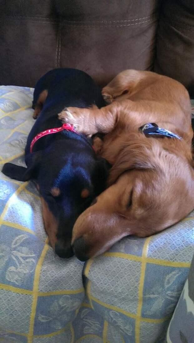 Facebook : Mi perro Salchicha me AMA https://www.facebook.com/pages/Mi-perro-Salchicha-me-AMA/425990280846978?ref=hl: