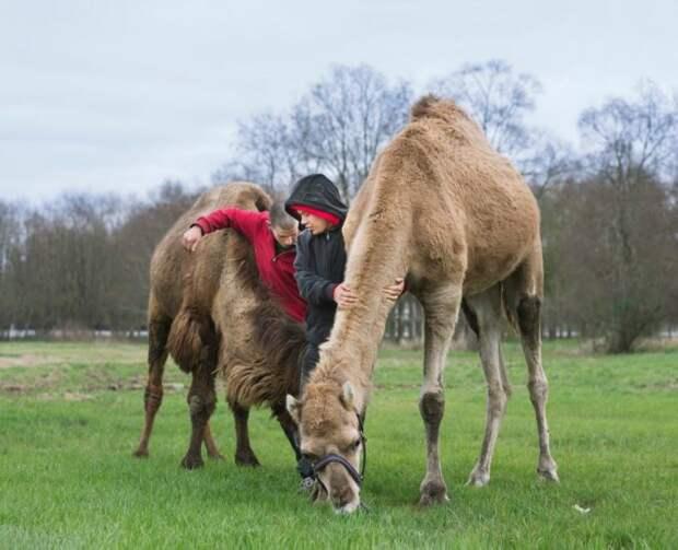 Связь человека и животного: такие разные отношения с братьями нашими меньшими
