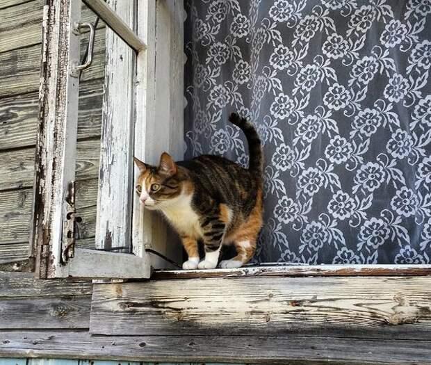 Трехцветная кошка в деревне