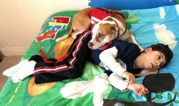 Собака помогает мальчику-инвалиду справиться с болезнью