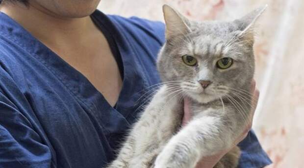 Удивительная история! Кошка прожила в запечатанном контейнере 49 дней ...