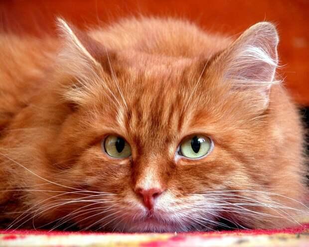 Наш кот по имени Крендель - теперь консультант-теоретик