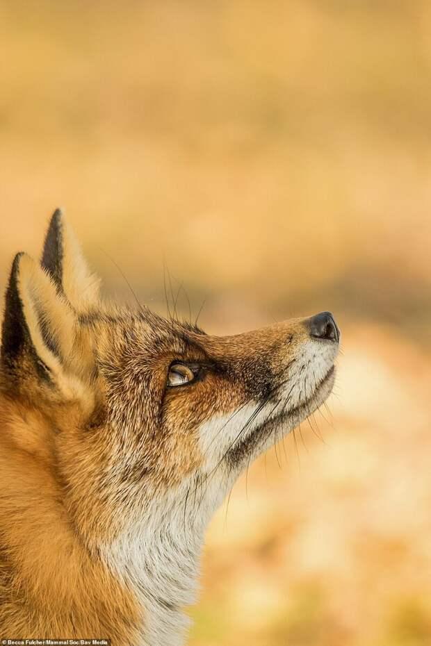 Победители конкурса любительской фотографии Mammal Photographer of the Year 2020