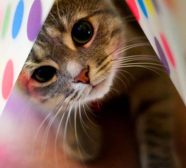 Кошки фото / VFL.Ru это, фотохостинг без регистрации, и быстрый хостинг изображений.
