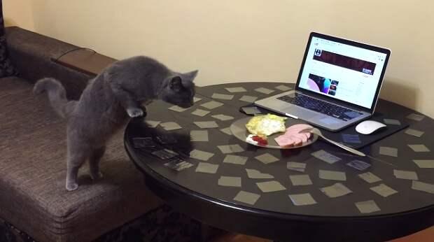 Самый простой способ отучить кота лазить по столу