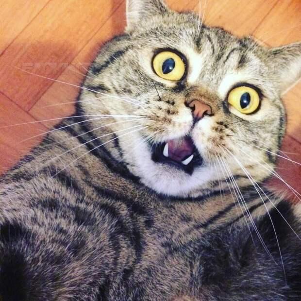 20 диких вещей, которые ты тайно делаешь со своим котиком