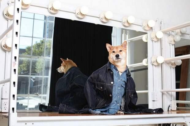 Собака стала высокооплачиваемой моделью мужской одежды
