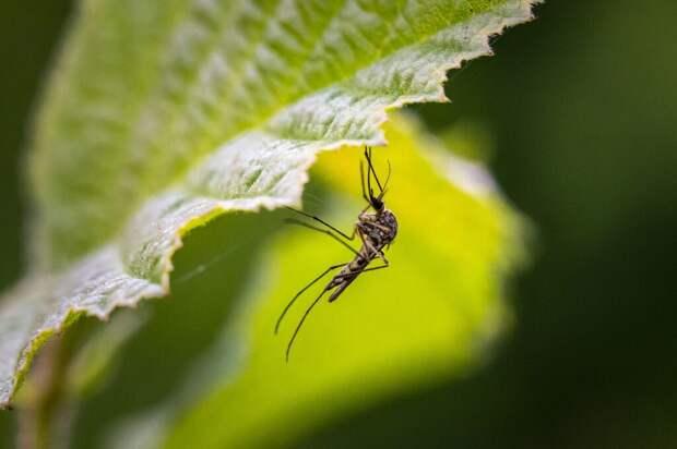 8 способов уменьшить зуд от укусов комаров