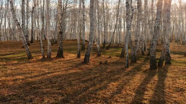 Метаморфозы весеннего леса
