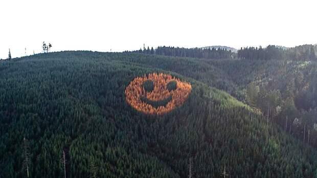 Огромная улыбка с деревьев в США