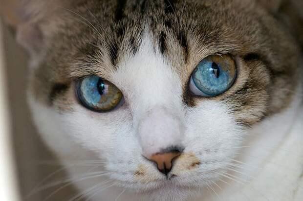 25 необычайно красивых животных с разноцветными глазами Ультрамарин