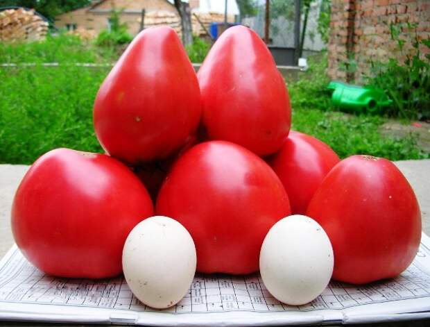 помидоры Чудо земли