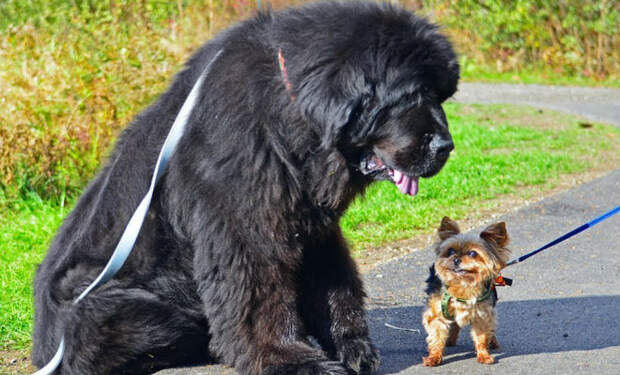 5 самых добрых в мире собак