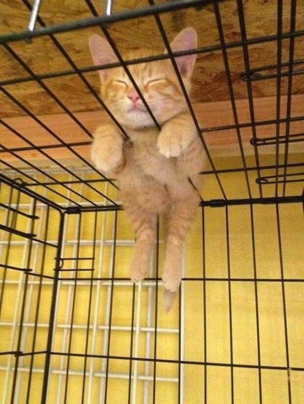 Кошки могут заснуть в любом месте и в любой позе
