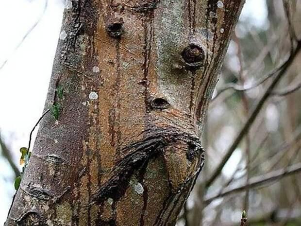 Деревья — как живые   дерево, лица, прикол