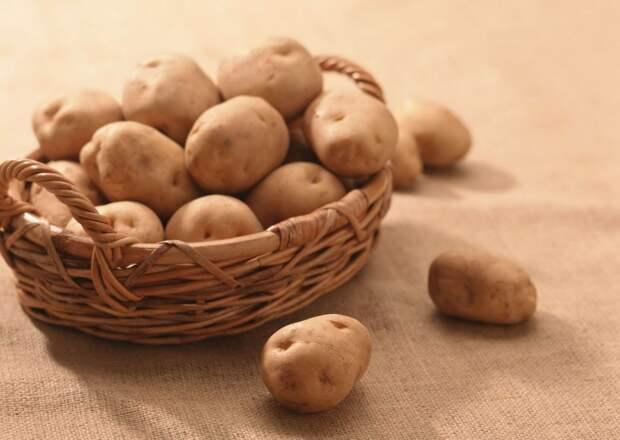 Cорта картофеля для разных типов почв