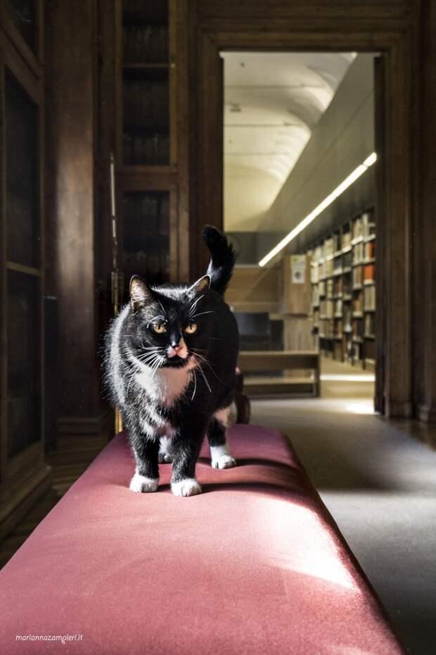 Фотографии кошек, которые живут в местах, где работают люди 8