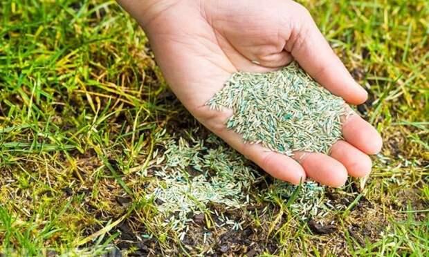 как смешивать семена люцерны с песком