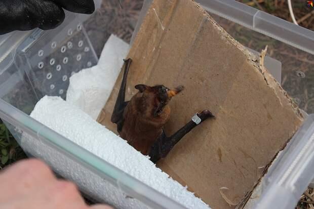 Выхаживали летучих мышей все неравнодушные . Фото: Анна ПОПОЛИТОВА