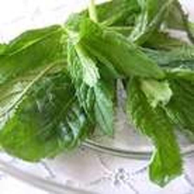 В кастрюле вскипятить 0,75 л воды. Веточки мяты промыть, встряхнуть и отделить листики от стебля. Листья мяты и сахар положить в один чайник, зеленый чай в другой. В чайник с мятой и сахаром влить 0,25 л кипятка. Остальным кипятком залить листья зеленого чая и дать им настояться примерно 3 минуты. Затем через ситечко перелить чай в чайник с мятной настойкой и хорошо перемешать ложкой.