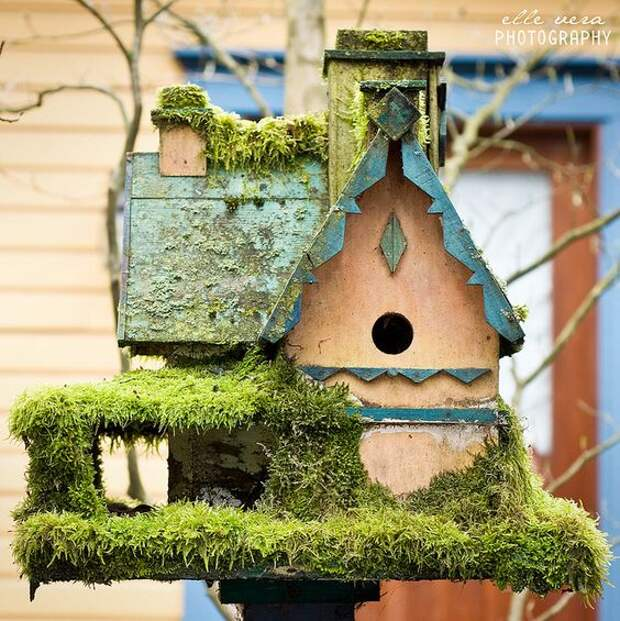 Мосс покрыта птица дом .: