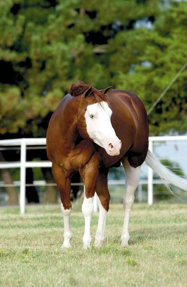 Еще одна лошадка в маске животные, лошадь