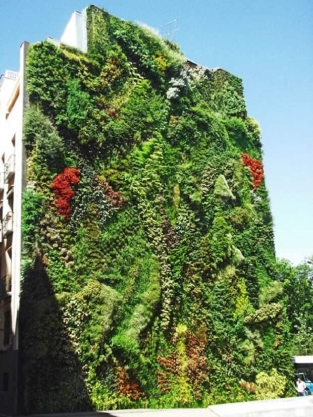 На сравнительно небольшой площади стены поместилось больше 12 тыс. растений (CaixaForum Madrid, Испания). | Фото: mundandy.com.