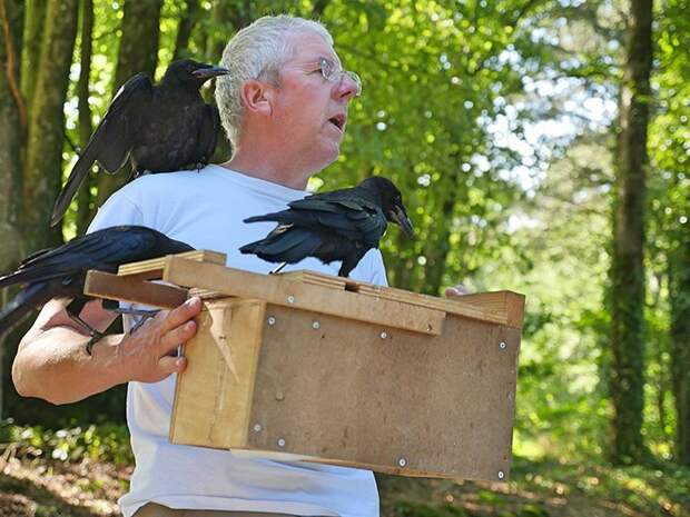 Грачей - Бубу, Бэмбу, Билл, Блэк, Бриколь и Бэко - обучили собирать мусор ворон, животные, парк, помощь, птица, уборка, франция