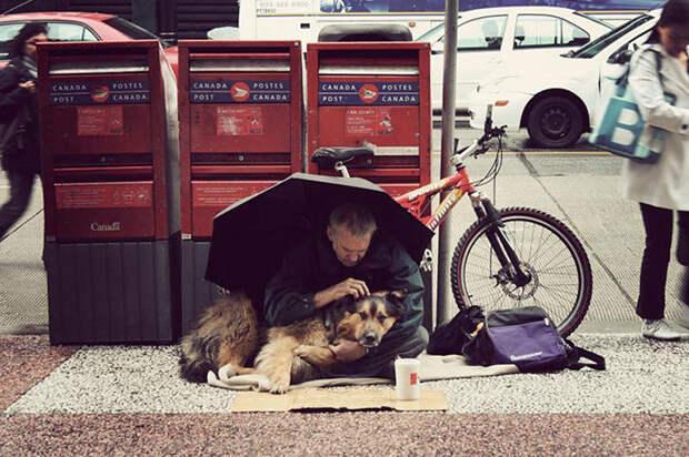 5. Лучшие друзья под зонтом бездомный, любовь, собака