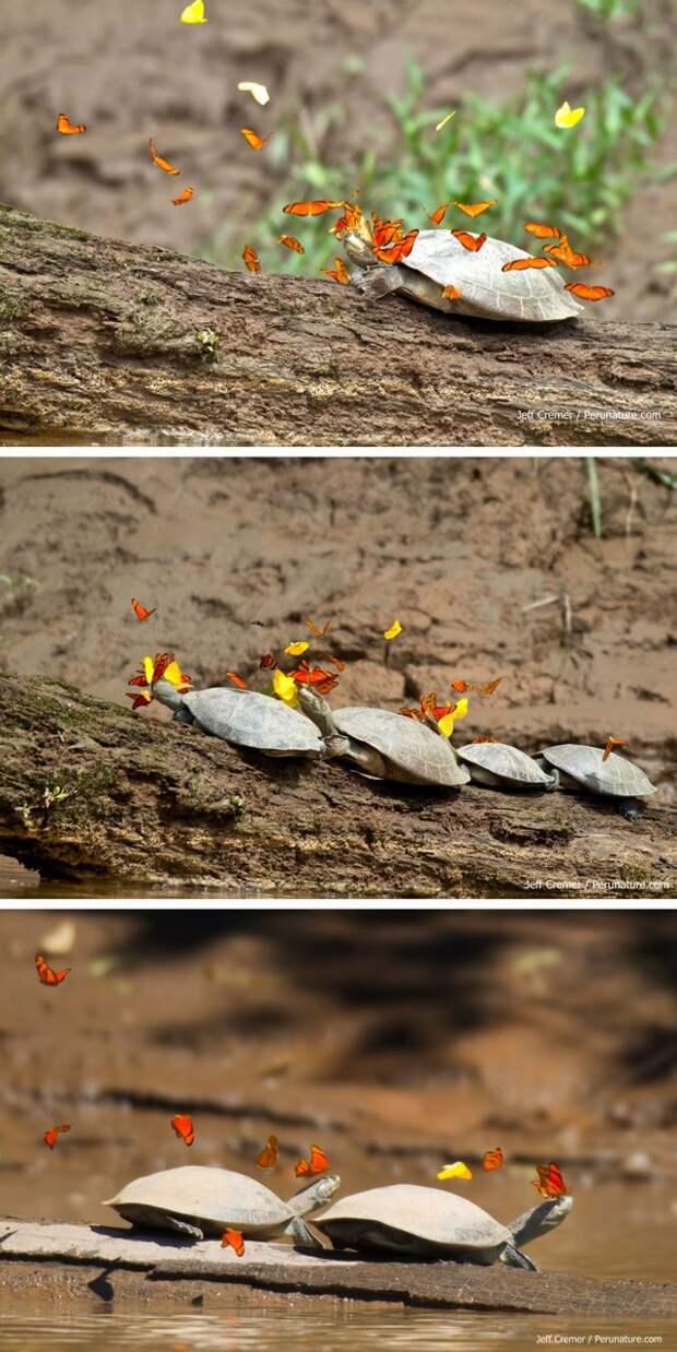Сказочные фотографии животных с бабочками  бабочка, животное, фото