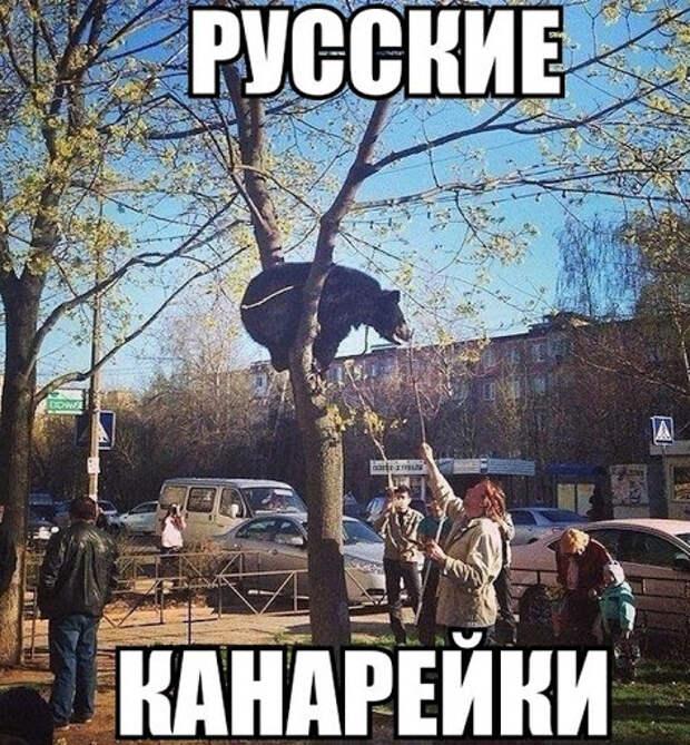 Подборка прикольных фото русских канареек (50 фото) - Смешные фото ...