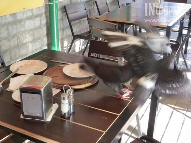 В пиццерии Севастополя кормят очень вкусно! Даже голуби выстроились в очередь (фото)