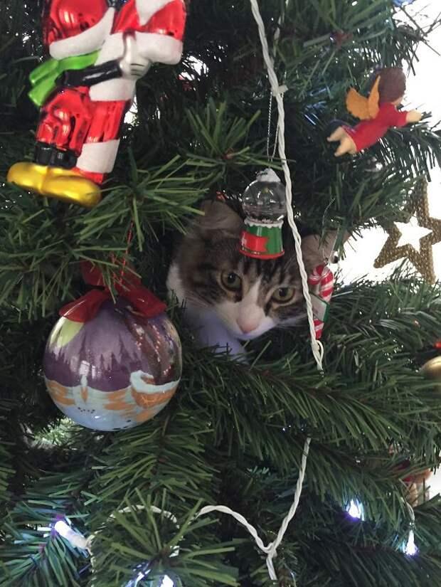 46. Здесь меня не найдут елка, кошка, подборка
