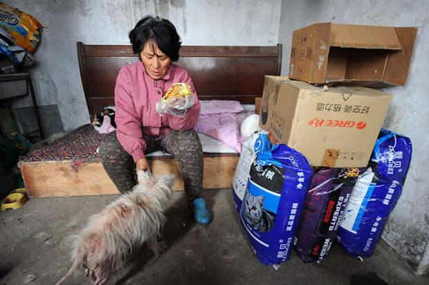 Она спасла 100 собак от верной смерти