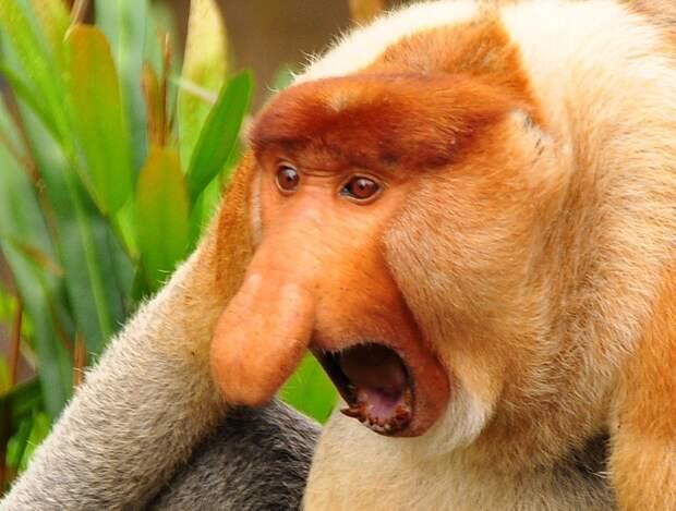 ugliest02 11 претендентов на звание самого уродливого животного на планете
