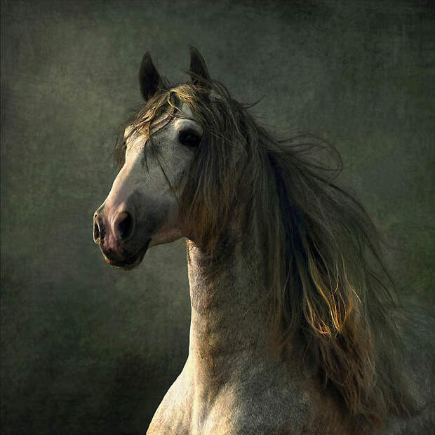 5. Испанские лошади – Конкистадор Эта порода была известна своей отвагой, как боевой конь, и ее це
