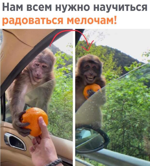 Подборка смешных, классных и забавных картинок с надписями для хорошего настроения